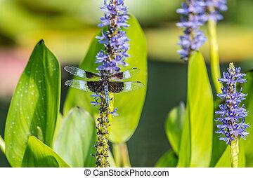 Dragonfly on a aquatic plant