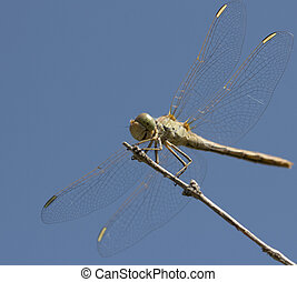 dragonfly on a background of blue sky