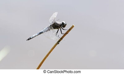 Dragonfly on a Branch