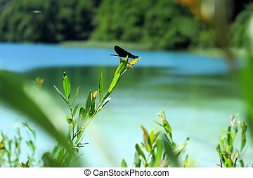 Dragonfly on a leaf at Croatia's Plitvice Lakes National Park