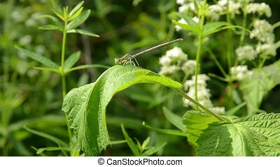 Dragonfly on a leaf.