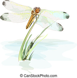 Dragonfly on a pond. Watercolor imitation.