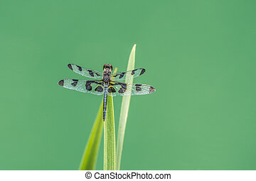 Dragonfly on a water plant