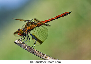 dragonfly on a wood branch and sky