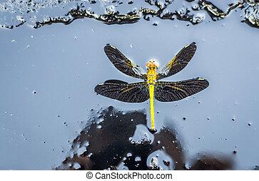 dragonfly on black background