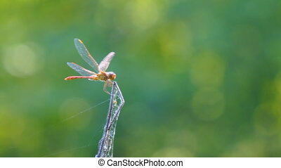 Dragonfly on dry branch