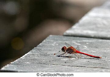 Dragonfly on grey wood