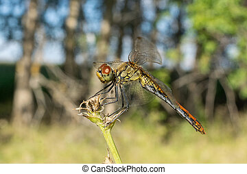 dragonfly on the grass