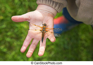 Dragonfly on the palms of the child. View from above.