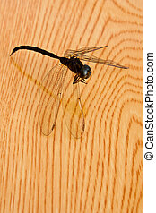 dragonfly on wood table
