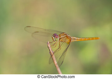 Dragonfly Perched on a Branch
