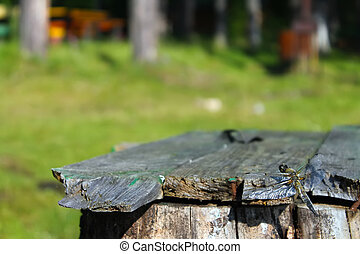 Dragonfly sits on a wooden bench in the background of trees