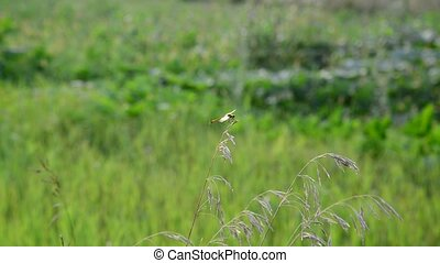 Dragonfly sitting on the grass on summer meadow - Dragonfly...