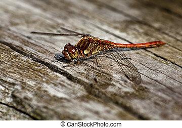 Dragonfly sitting on wood