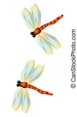 Dragonfly - two dragonflies on the white background