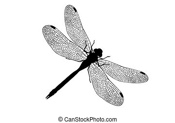 Dragonfly represented in the form of a tattoo