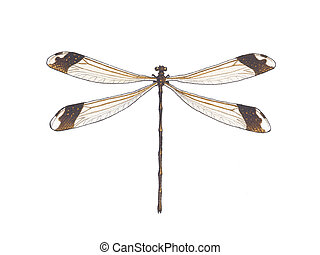 dragonfly - View from above on a dragonfly