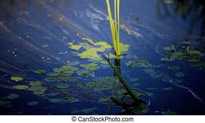 dragonfly - Black dragonfly