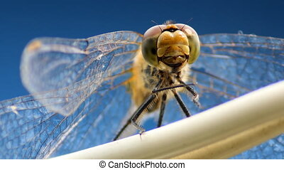 dragonfly swinging on a wire