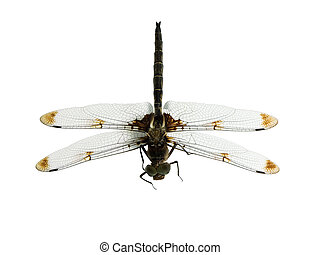 Dragonfly - Top of a dragronfly isolated on a white...