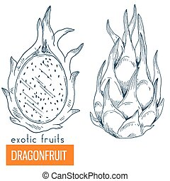 Dragonfruit. Hand drawn vector illustration