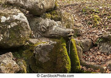 dragon's, 頭, 森林, 春