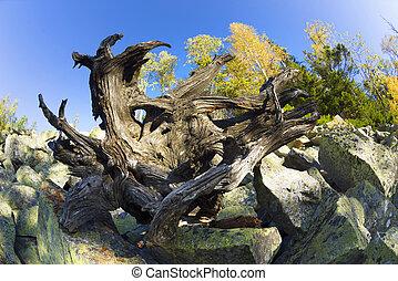 dragon's, fej, a hegyekben