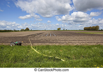 draining a potato field - agricultural landscape with rain...