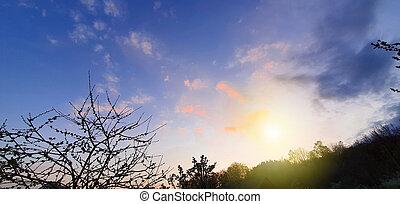 dramático, colorido, nubes, ocaso, árboles.