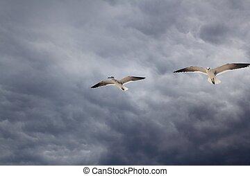 dramático, voando, céu, gaivota, nublado