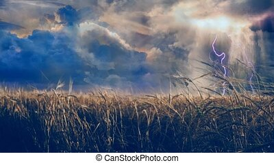 Dramatic clouds over field of wheat