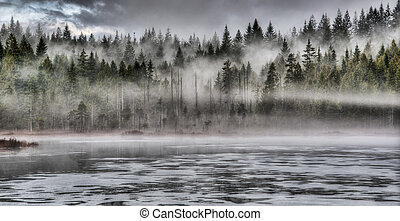 Dramatic Fog in Forest Along Lake - Lakeside forest with...