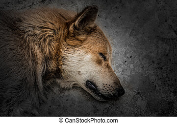 Dramatic image of a dog sleeping or dead