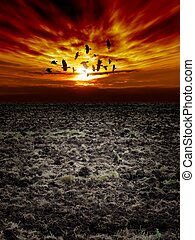 Dramatic landscape - Big arable field, dark sunset sky,...