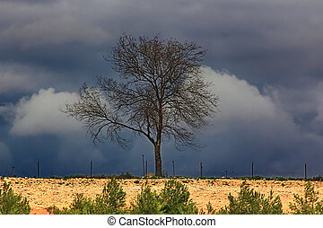 dramatic lone tree in the field during a storm