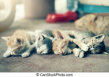 Dramatic moment A group of different kitten sleeping on the floor.In soften focus.