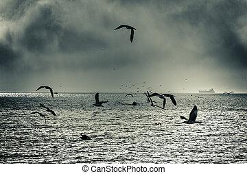 Dramatic sea gull flight