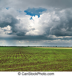 dramatic sky and green field in spring. rain before