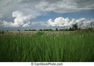 dramatic sky over dandelion fields