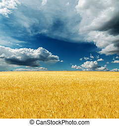 dramatic sky over field with golden harvest