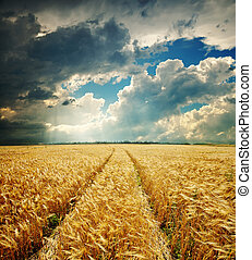dramatic sky over golden field