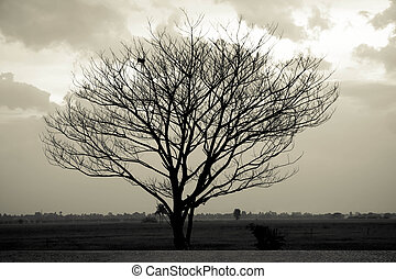 Dramatic sky over lonely dead tree. Art nature.