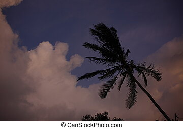 Dramatic sky with palm in sunset time