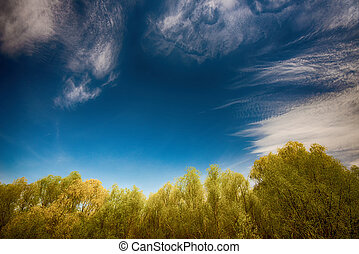 Dramatic sky with top of trees on the bottom
