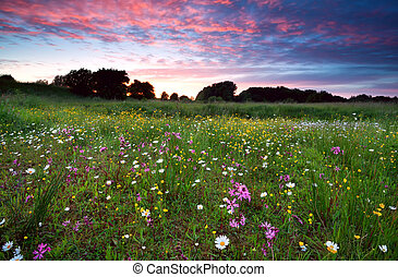 dramatic summer sunset over flowering meadow