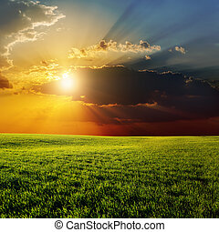 dramatic sunset over agricultural green field