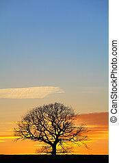 Dramatic Sunset Sky with Single Tree Silhouette