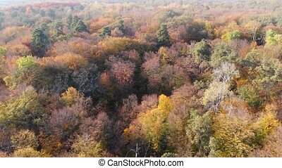 Dramatic view of a dense deciduous forest in full autumn colors, from an aerial perspective. 4k video