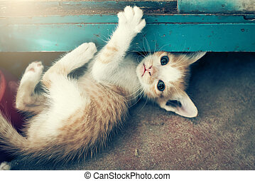 dramatický, moment, jeden, skupina, o, neobvyklý, kotě, spací, dále, ta, floor.in, zjemnit, upravit ohnisko čočky.