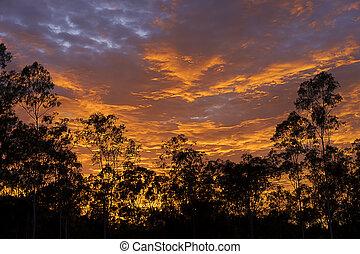dramatique, arbre, gencive, levers de soleil, australien, silhouette